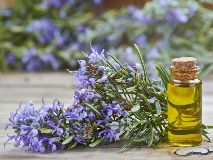 Hair Loss Treatment-Rosemary Oil